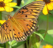 Butterfly, Gulf Fritillary by Bob Hardy