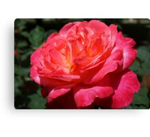 Big Red Pink Rose Flowers Art Prints Roses Canvas Print