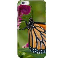 Wanderer Butterfly, Northern Territory, Australia iPhone Case/Skin