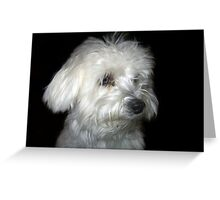 White Puppy Greeting Card
