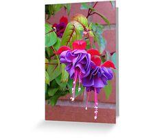 The Ballerinas - Dancing Fuchsia Belles Greeting Card