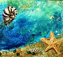 Sea star and nautilus by DoriAnderson
