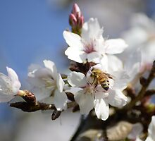 Bee in the Blossoms by Jessica Fittock