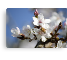 Bee in the Blossoms Canvas Print