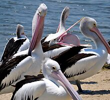 Disturbing Pelican by CaelisMiran