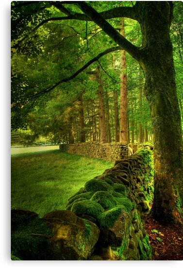 The Heart of the Forest  by Irene  Burdell