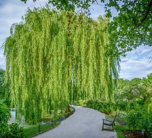 Under the Weeping Willow by naturesimagesBD