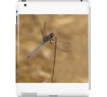 male Scarce chaser dragonfly iPad Case/Skin