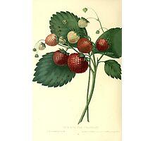 strawberries Photographic Print