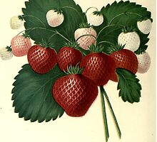 strawberries by #Palluch #Art