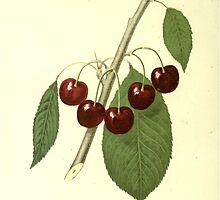 cherries by #Palluch #Art