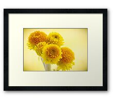 Common Everlasting, Yellow Buttons Framed Print