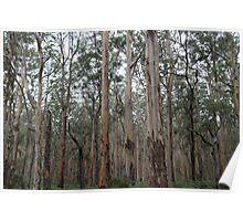 Gums... Landscape Poster
