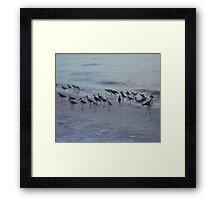 Little Birds on the Beach Framed Print