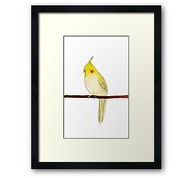 Yellow Cockatiel Framed Print