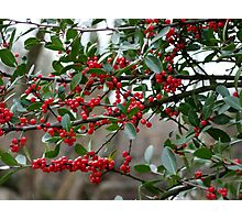 It's Time for Mistletoe & Holly Photographic Print