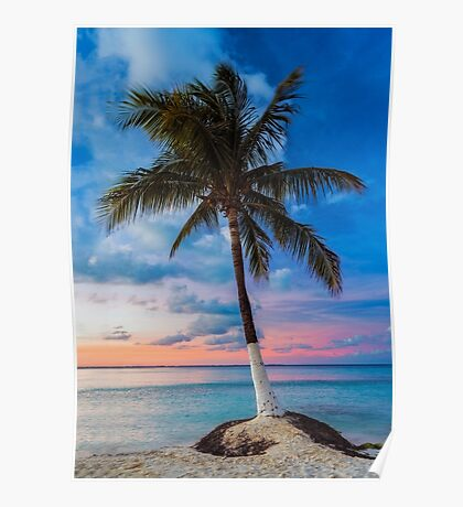 Cancun Palm at Sunset Poster
