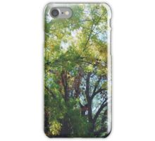 Autumn Trees iPhone Case/Skin