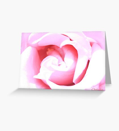 Suggestion of a Rose - Pink Greeting Card