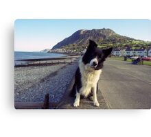 Indy on Llanfairfechan Promenade Canvas Print