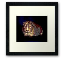 Guinea Pig Framed Print