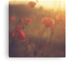 Red wild flowers poppies on hot summer day in brown warm tones Hasselblad square medium format film analogue photo Canvas Print