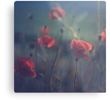 Red wild flowers poppies on hot summer day in blue tones Hasselblad square medium format film analogue photo Metal Print