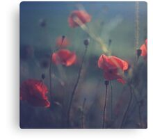 Red wild flowers poppies on hot summer day in blue tones Hasselblad square medium format film analogue photo Canvas Print