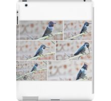 COLLAGE OF BLACK CHINNED HUMMINGBIRD iPad Case/Skin