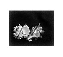 Ten of Shells - Abstract Macro Photographic Print