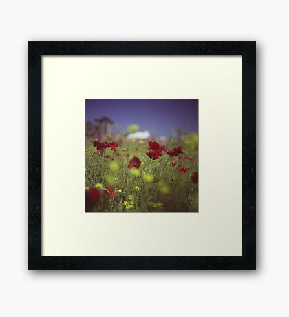 Red wild flowers poppies on hot summer day in urban city wasteland Hasselblad square medium format film analogue photo Framed Print