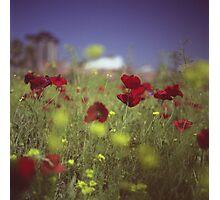 Red wild flowers poppies on hot summer day in urban city wasteland Hasselblad square medium format film analogue photo Photographic Print