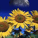glorious sunflowers by arteology