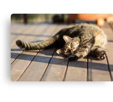 Afternoon Sun Stretch Canvas Print