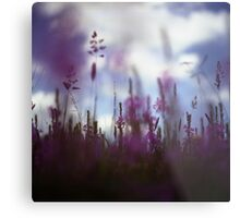Long grass and wild flowers on summer day in Spain square medium format film analogue photography Metal Print