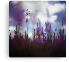 Long grass and wild flowers on summer day in Spain square medium format film analogue photography Canvas Print
