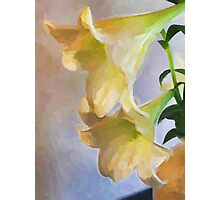 Two Lilies from the Side Photographic Print