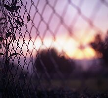 Wire fence and foliage on summer evening  in Spain square medium format film analogue photo by edwardolive