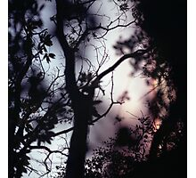 Tree branches on summer evening  in Spain square medium format film analogue photographer Photographic Print