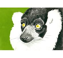 Lemur Photographic Print