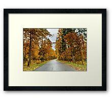 Trees near the road Framed Print