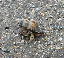 Hermit Crab Out for a Walk by Trish Meyer