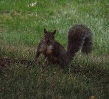 Fluffy Fun Squirrel  by TScottAdams