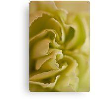 Carnation Macro Canvas Print