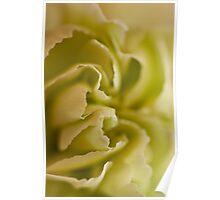 Carnation Macro Poster