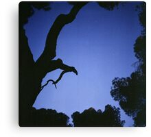 Tree branches in silhouette against blue dusk sky  square medium format film analogue photographs Canvas Print