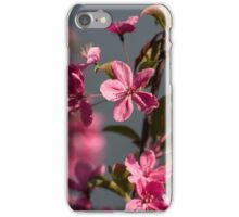 pink apple tree flowers iPhone Case/Skin