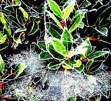 Frosty holly with cobweb photo card by pollywolly