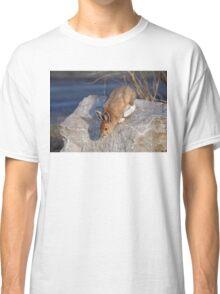 Snowshoe hare (Lepus americanus) in Spring Classic T-Shirt
