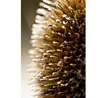 Spikes Photographic Print